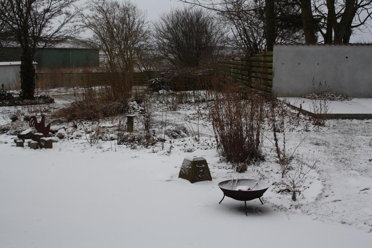 Haven med sne