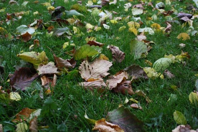 Blade i græsset