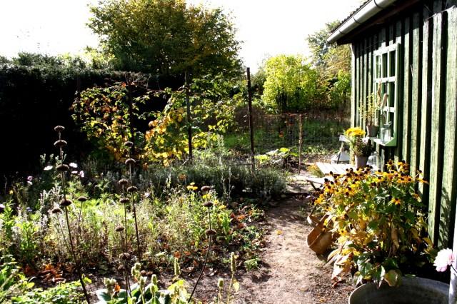 gul hønsegård