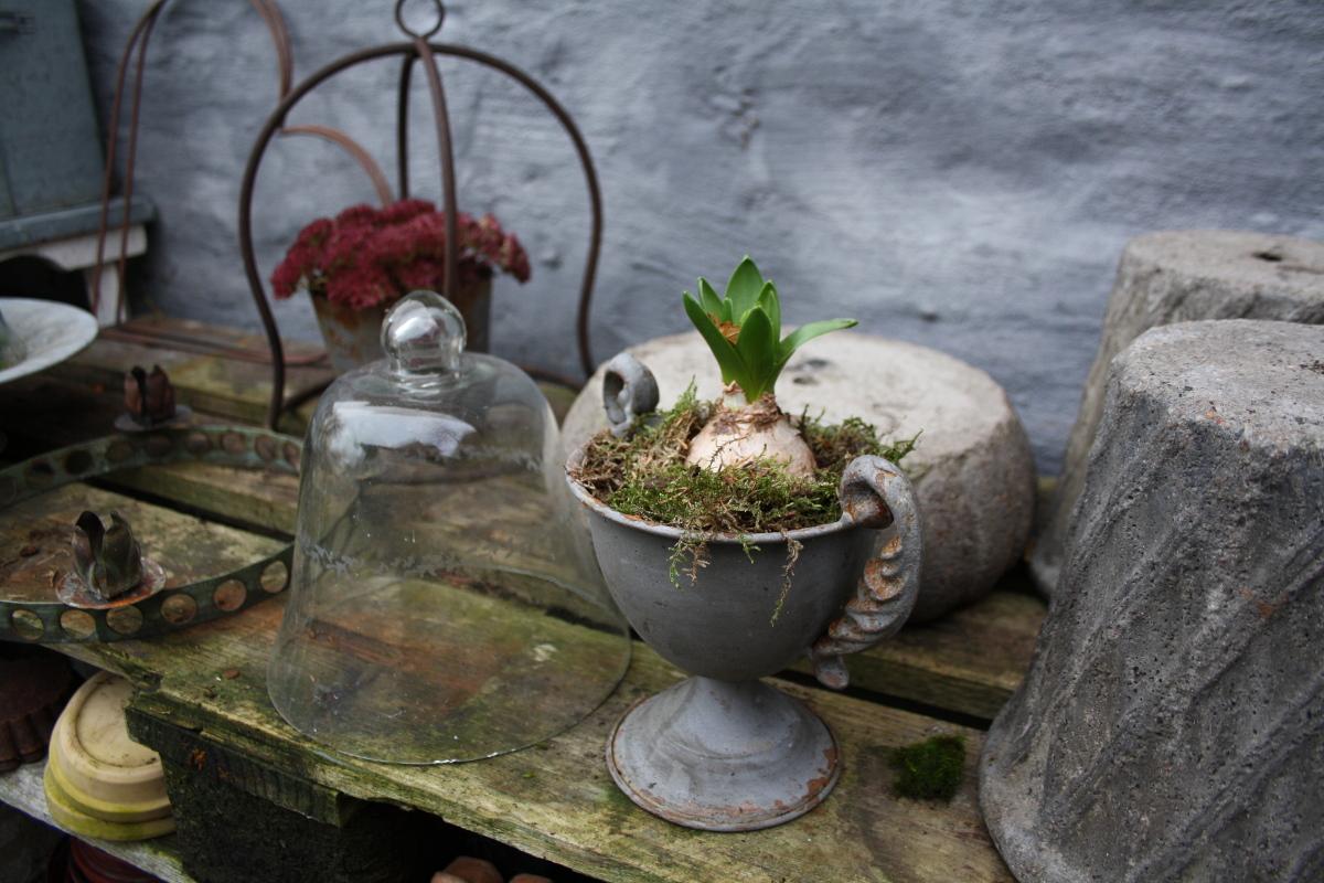 Hyacint og lysholder