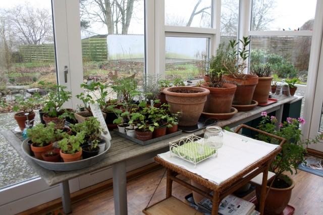 Havebord med planter
