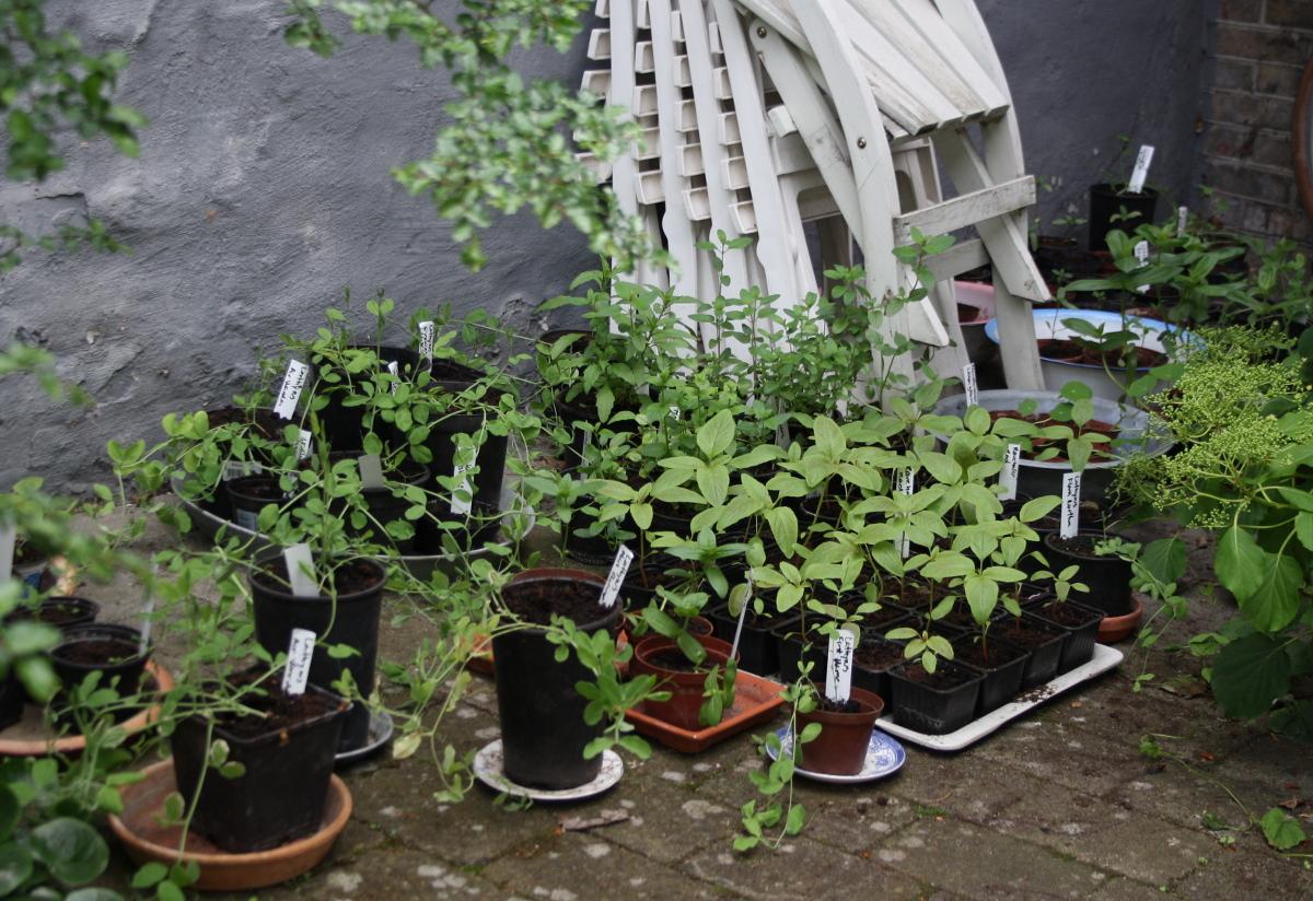 Udplantningsplanter