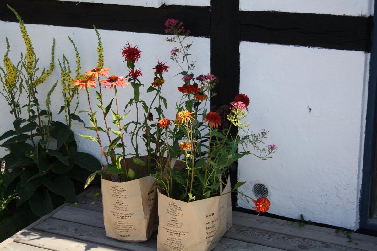 Planter på Møn
