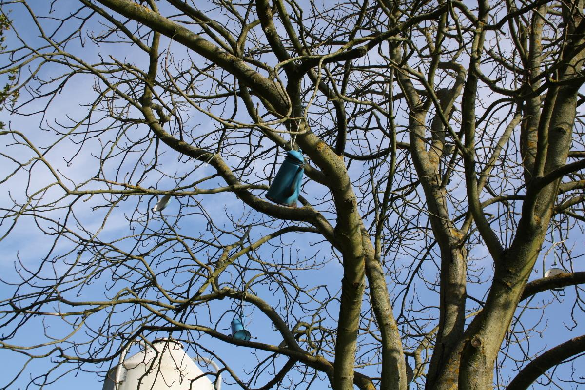 Madam blå træ