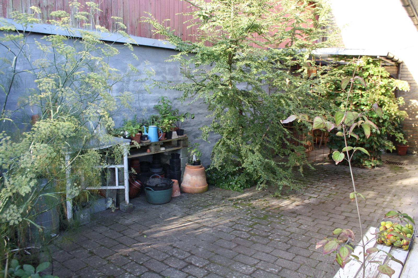 Plantebord og sydbøg