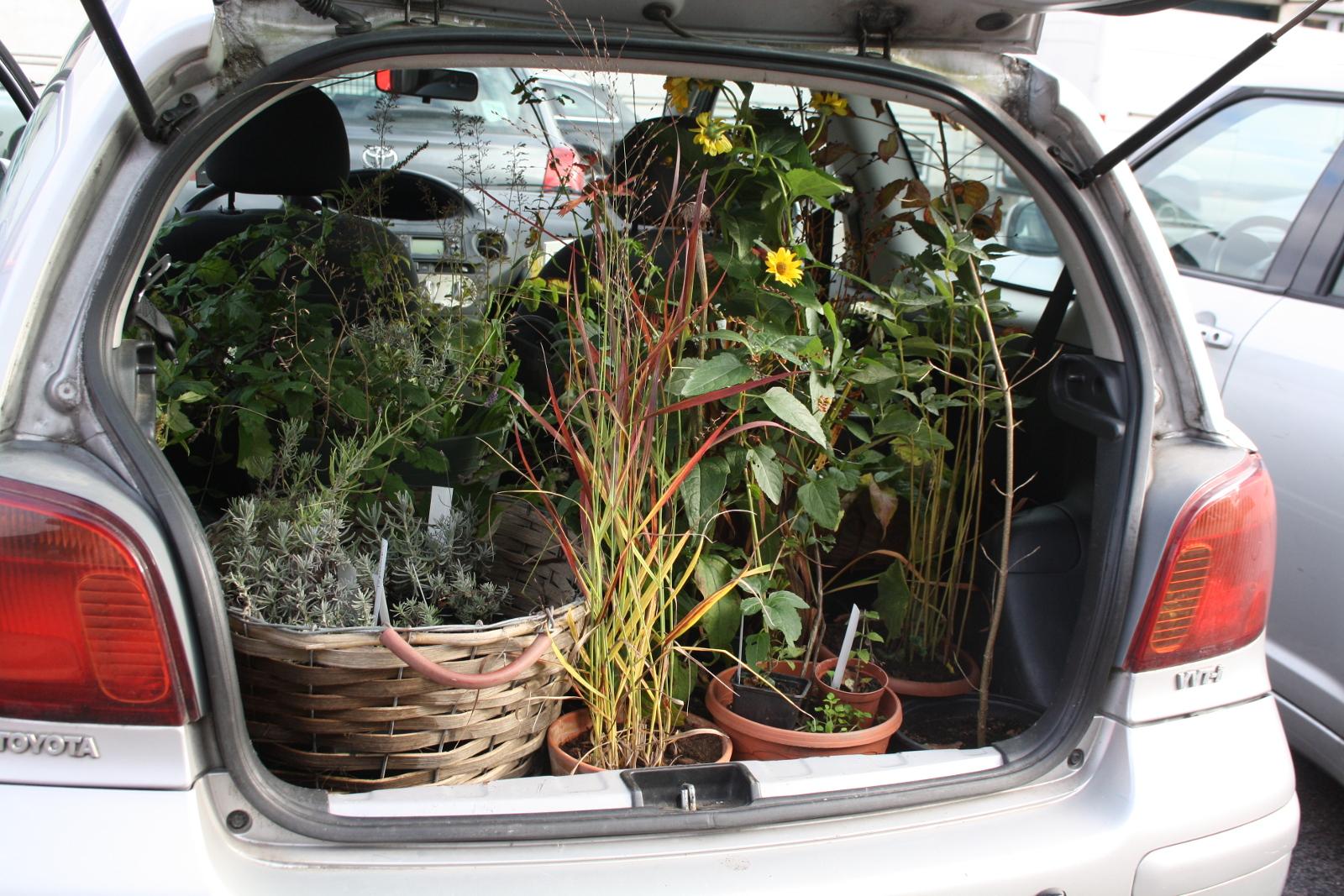 Bagagerum med planter