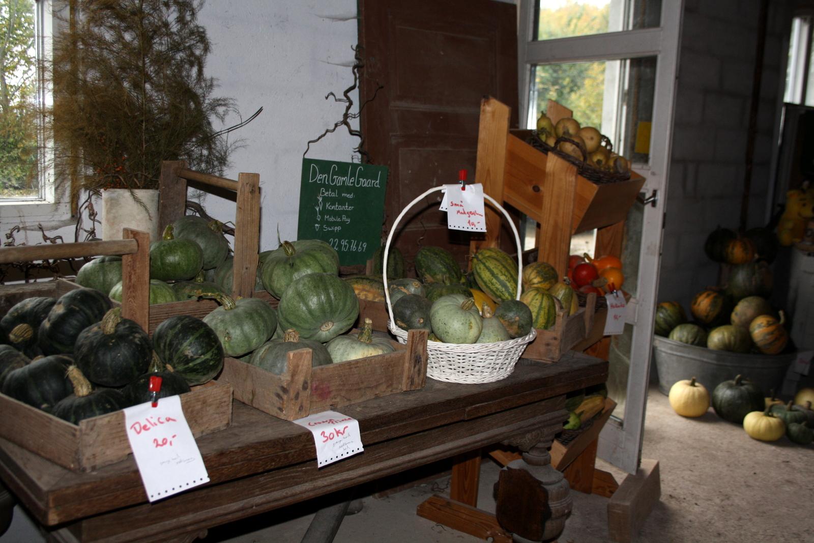 Bord med græskar