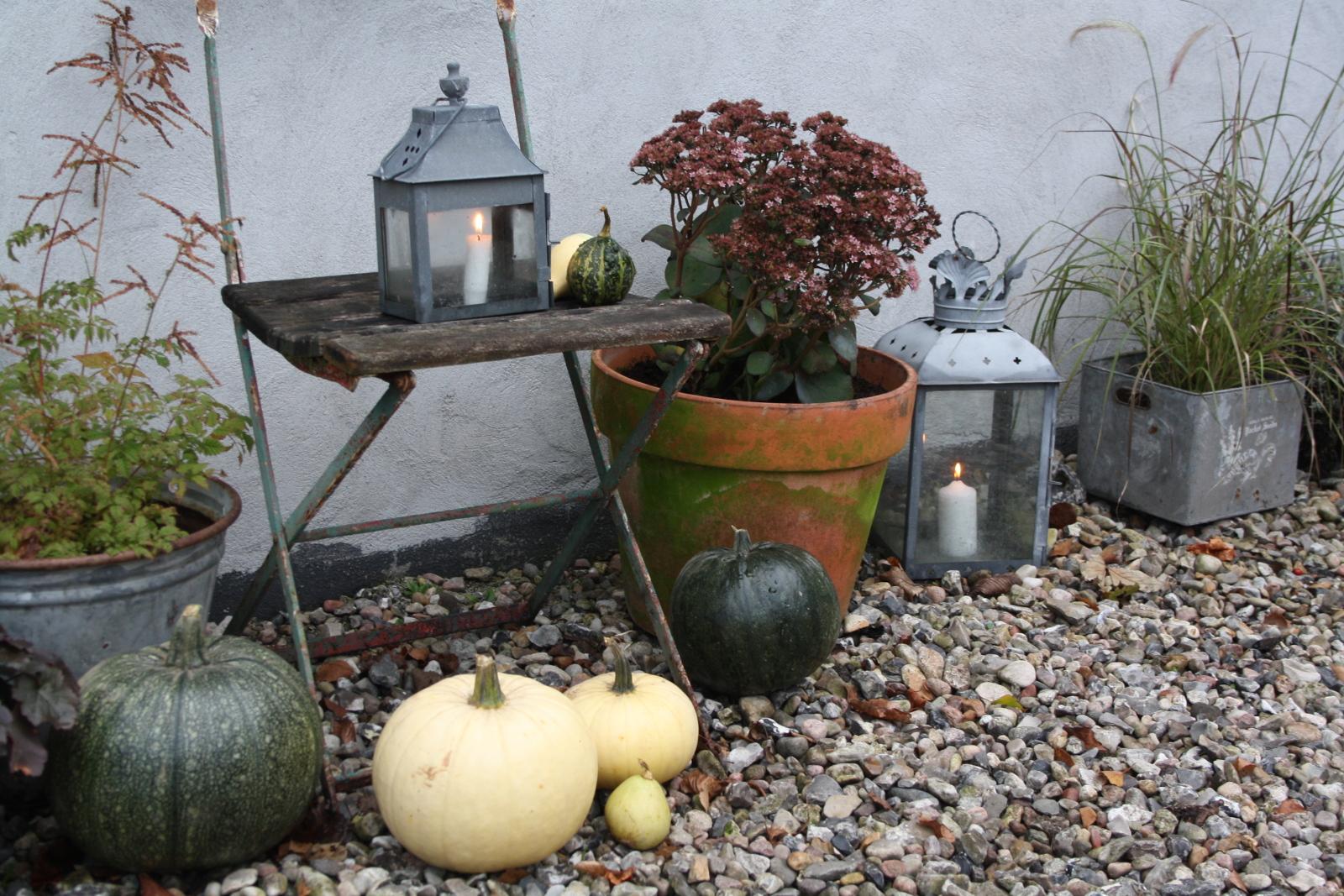 Græskar og lanterner