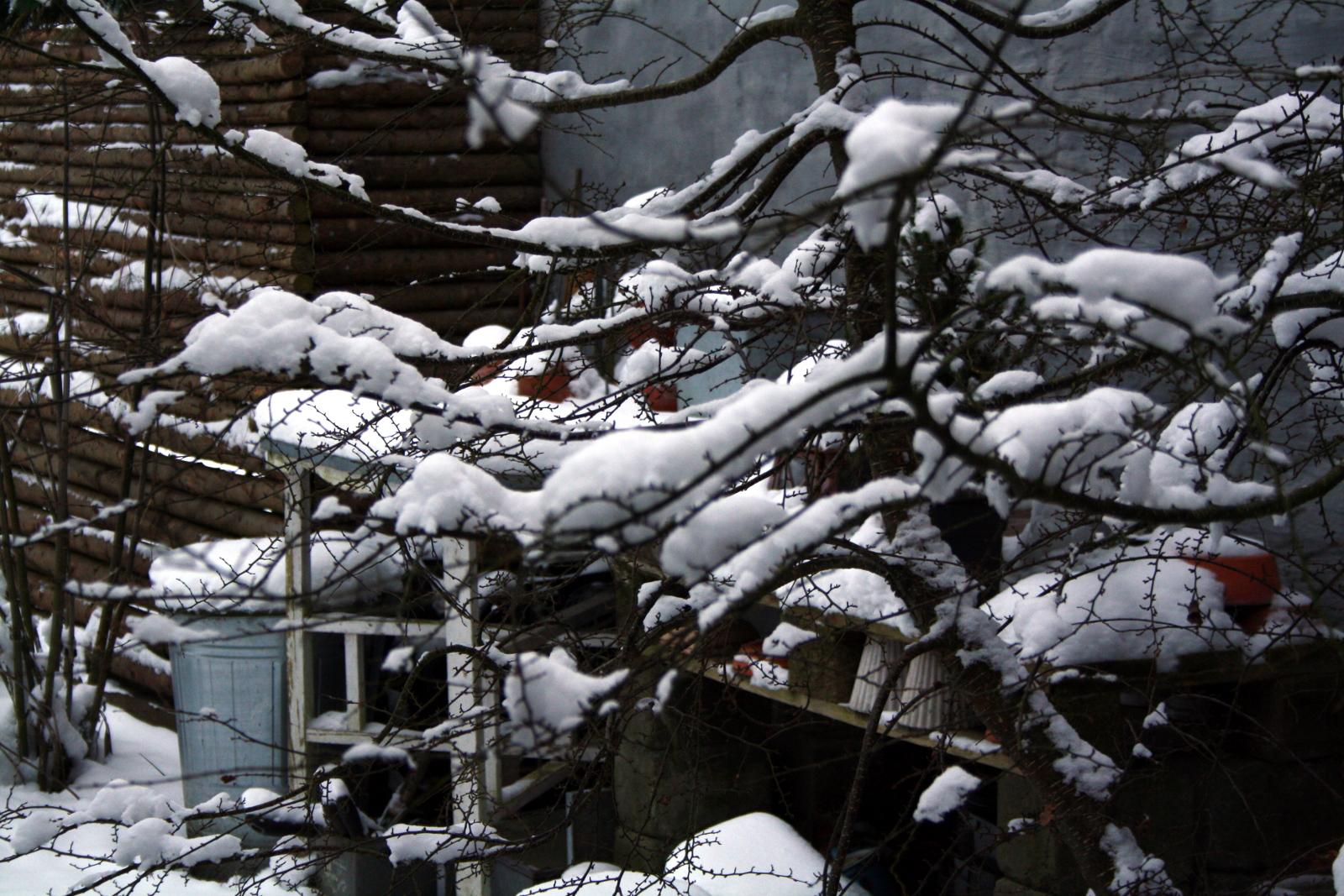 Sydbøg med sne