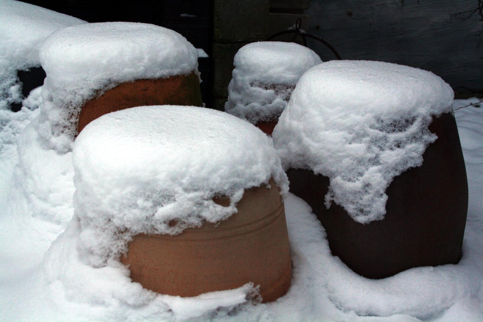 Urtepotter med sne
