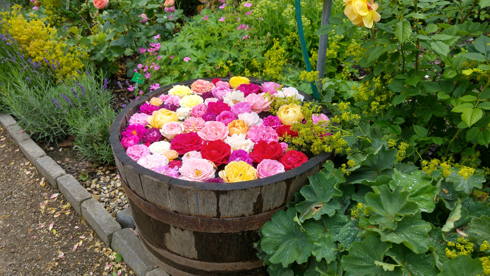 Balje med roser