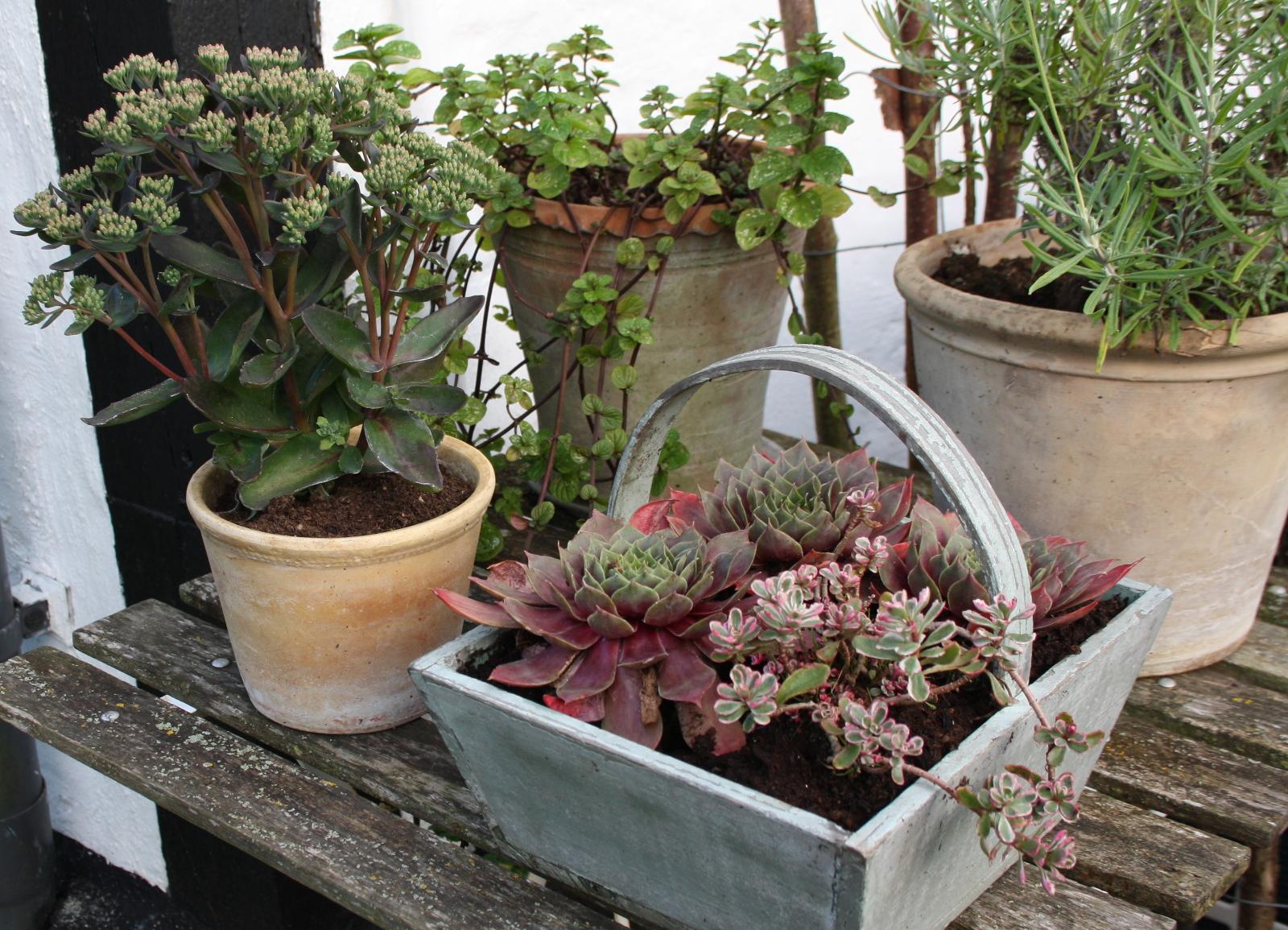 Bord med sensommerplanter